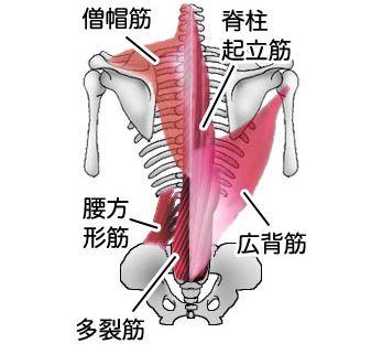 脊髄仕組み