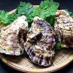 牡蠣は完璧に近い精力増強食材!3日に1回は摂取が理想だが・・・